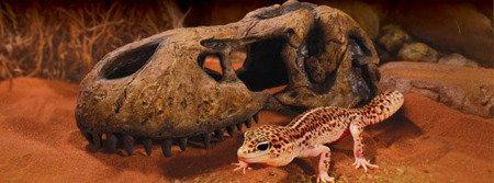 Exo Terra T-Rex Skull - Czaszka dinozaura 22 x 10 x 9 cm