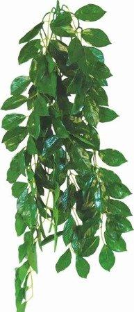 Happet Roślina terrarium Ficus 70 cm