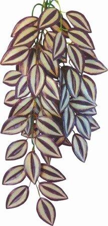 Happet Roślina terrarium Tradescantia Zebrina 70 cm